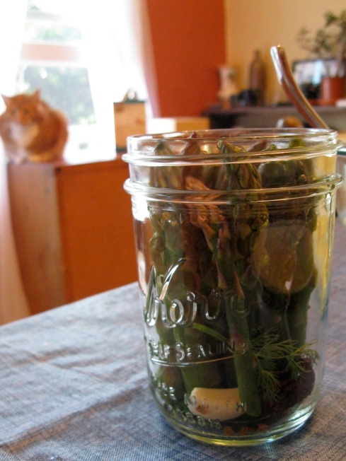 Asparagus in jars, before vinegar is added. This asparagus is a little long, you can see how it sticks up too high. Also, that's Jasper in the background.