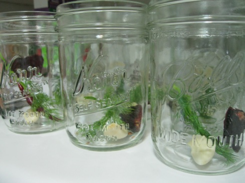 Jars with garlic, chile, and dill. Next they will be filled with asparagus and vinegar mixture.