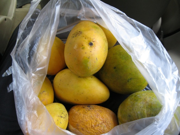 The bag of mangoes coming back from the store - they are so fragrant!