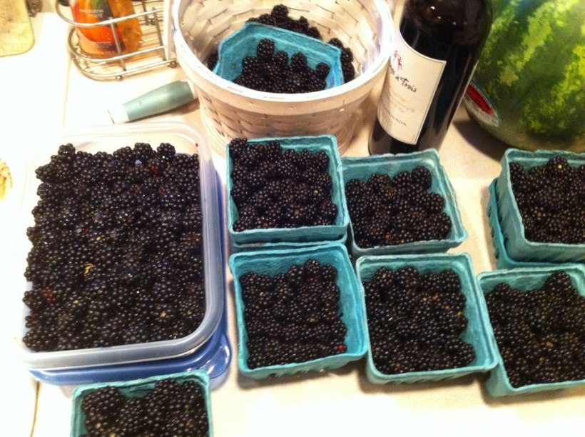 These are all the berries we picked last year. See why I was excited?