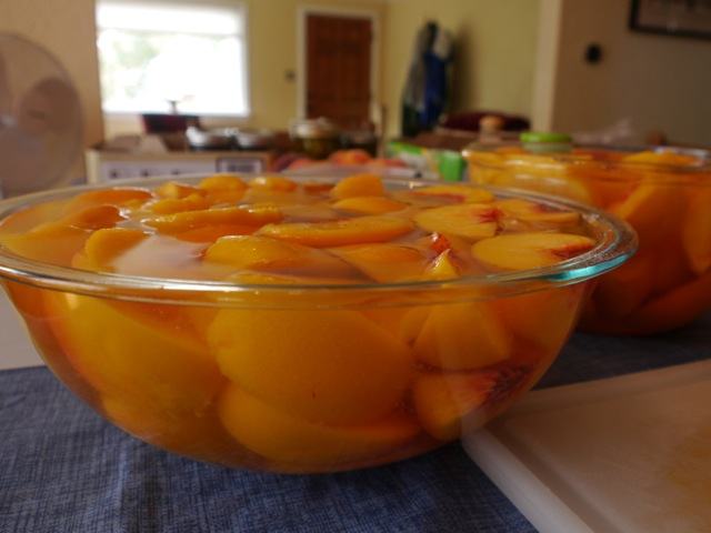 Look how full the bowls are! We wouldn't have had room for another peach. Here the peaches are resting in cool water mixed with citric acid.