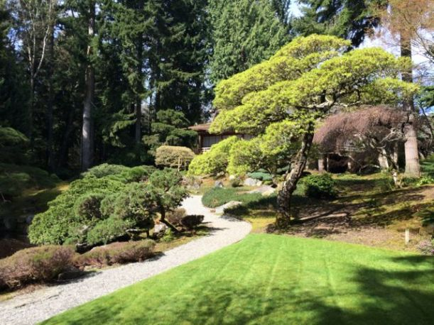 The Japanese Garden at the Reserve.