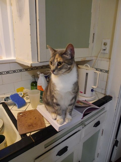 Annabeth is a great helper in the kitchen. Here she is ensuring that I can't read the recipe. Later she stole carrots from the compost and chased them all over the house, finally eating them. This recipe is fun for the whole family!
