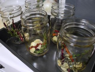 Prepping the jars - in sterile and still hot jars, add garlic, thyme, and red chili flakes.
