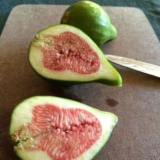 Desert King figs are green with pink centers. This is the type that does the best in Seattle.