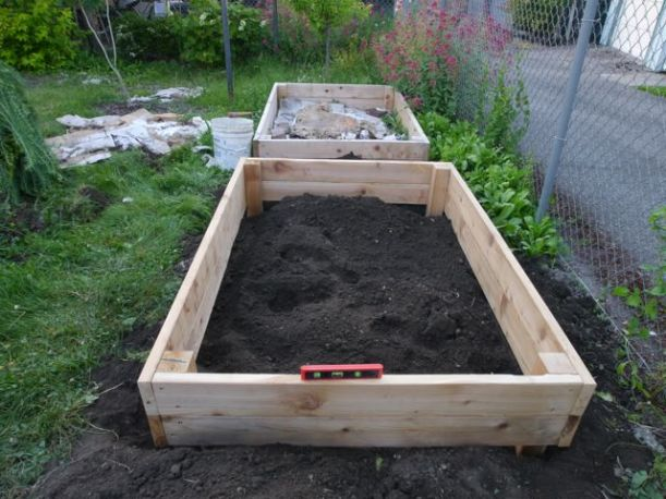 Our raised beds installed. Here we are checking the level, and adding cardboard at the bottom. We have tons of morning glory in this part of the yard, so we wanted to beat it back as much as possible.
