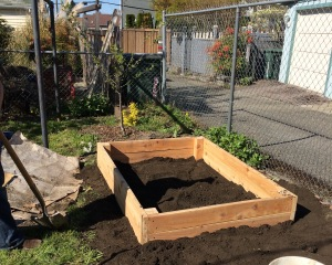 The first raised bed installed. It took a lot of prep to get the weeds out of the soil first, so next we...